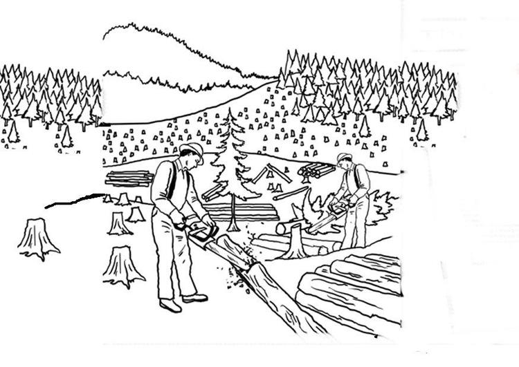 Disegno da colorare abbattimento degli alberi cat 14380 for Foto di alberi da colorare
