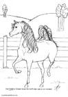 Disegno da colorare Achmed lo stallone