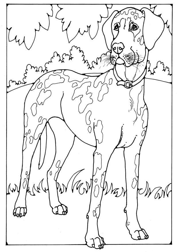 Kleurplaat Bull Terrier Disegno Da Colorare Alano Disegni Da Colorare E Stampare