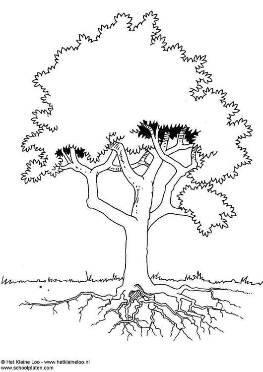 Disegno Da Colorare Albero Cat 3724
