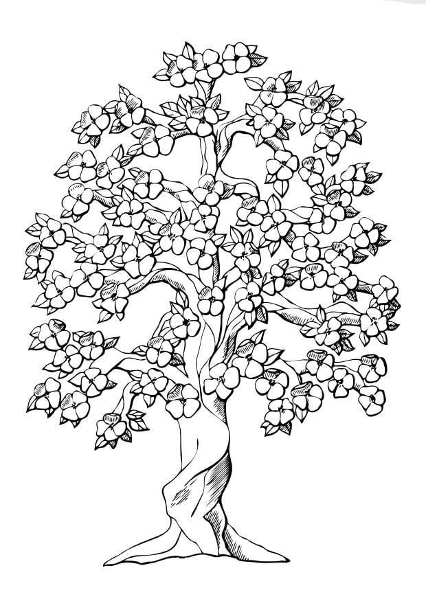 Disegno da colorare albero fiorito disegni da colorare e for Foto di alberi da colorare