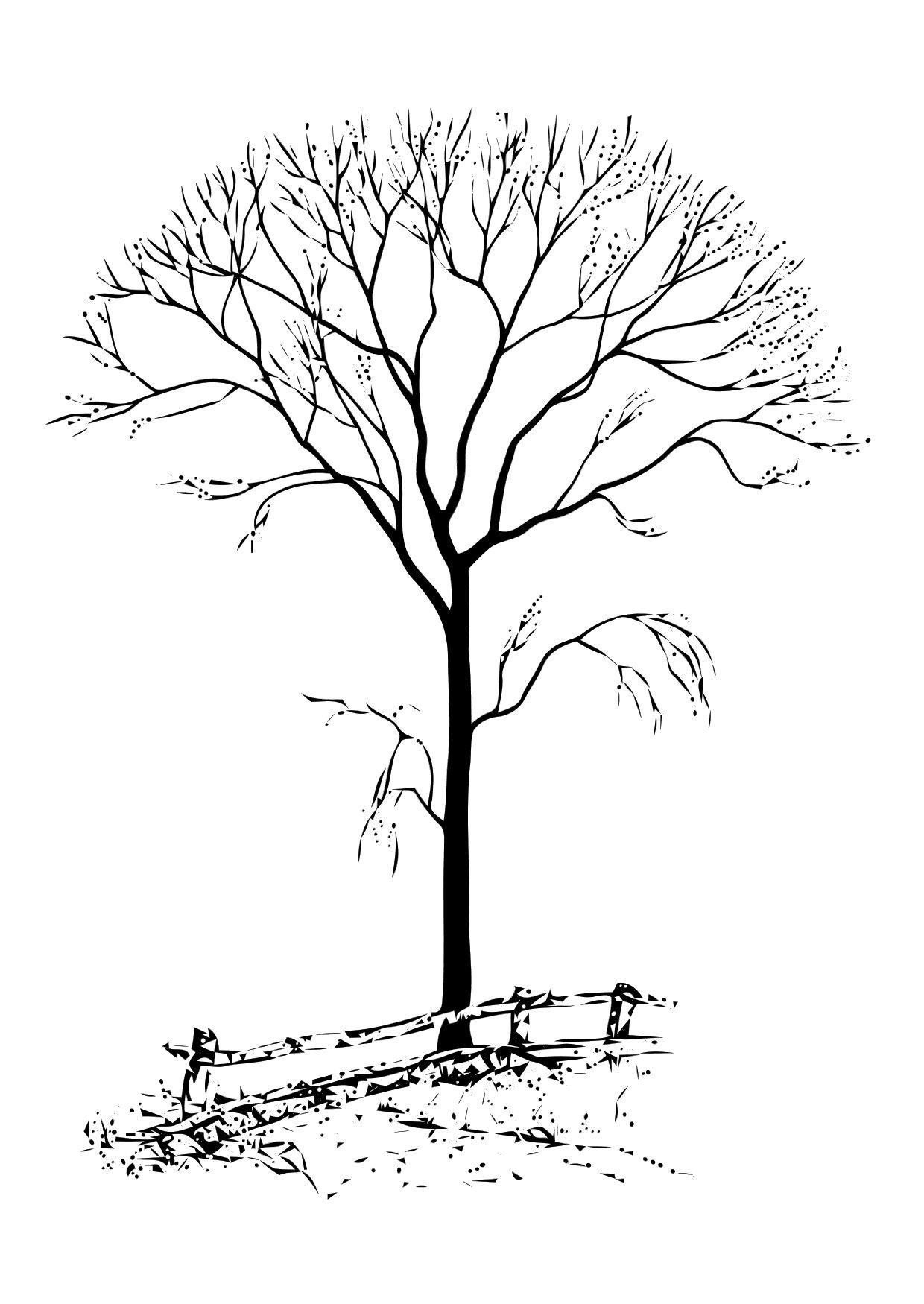Disegno da colorare albero spoglio