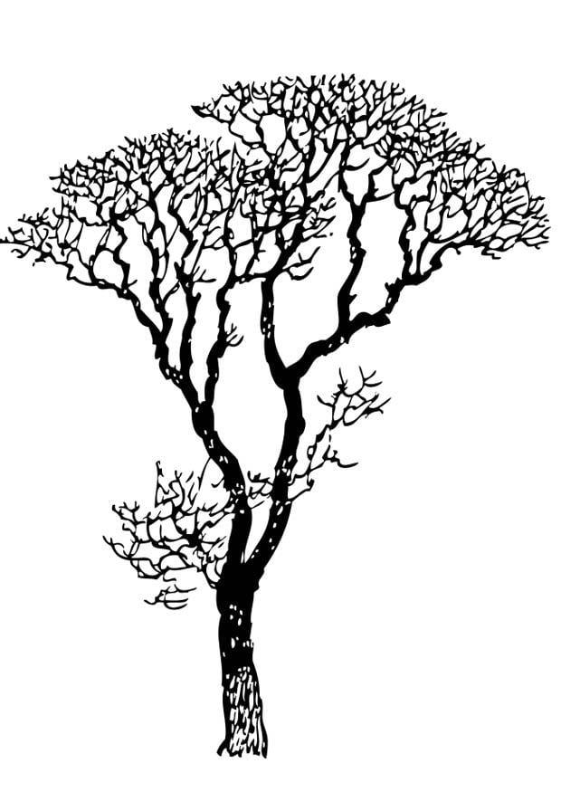 Disegno da colorare albero spoglio cat 17318 for Foto di alberi da colorare