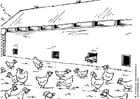 Disegno da colorare allevamento di galline