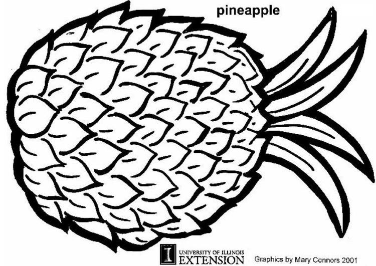 Disegno Da Colorare Ananas Cat 5883