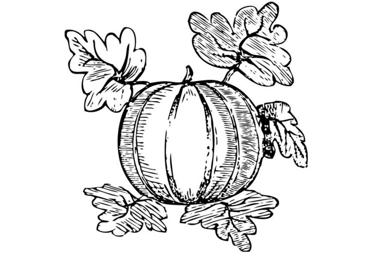 Disegno Da Colorare Anguria Cat 17396