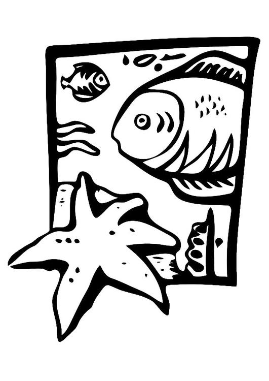 Disegno Da Colorare Animali Marini Cat 20679 Images