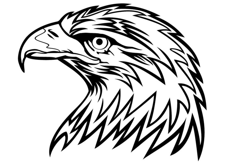 Disegno Da Colorare Aquila Cat 24672
