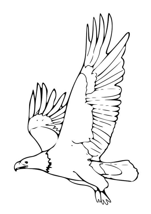 Disegno Da Colorare Aquila Cat 27499