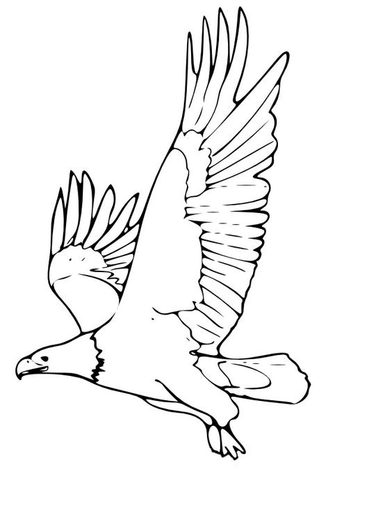Disegno Da Colorare Aquila Cat 9965