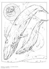Disegno da colorare balena blu
