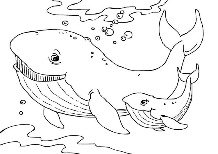 Disegno da colorare balene cat 27231 - Balene pagine da colorare ...