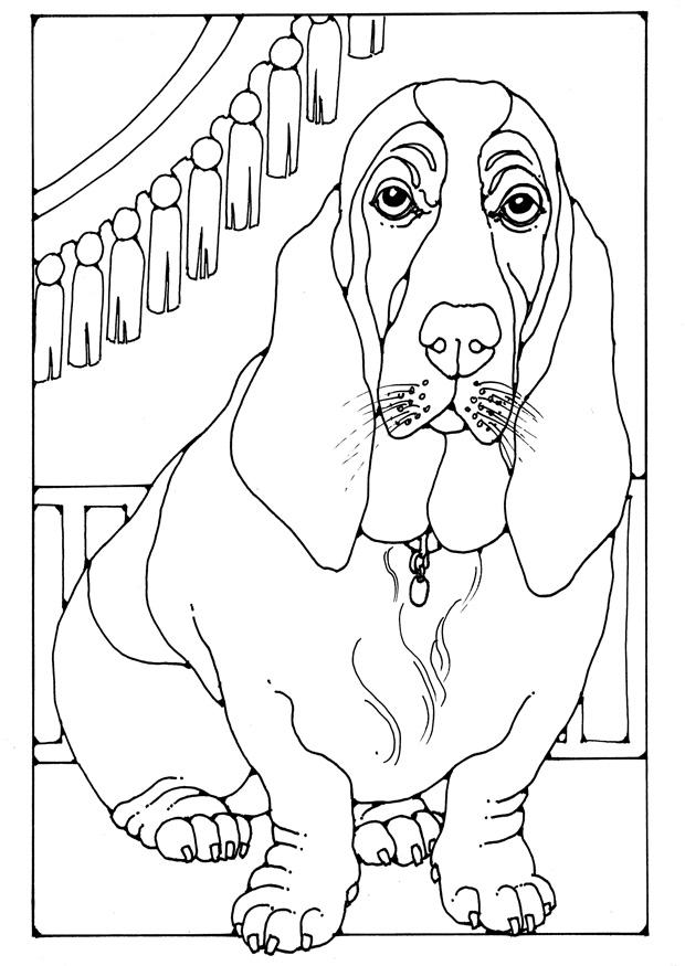 dog basset coloring pages - photo#12
