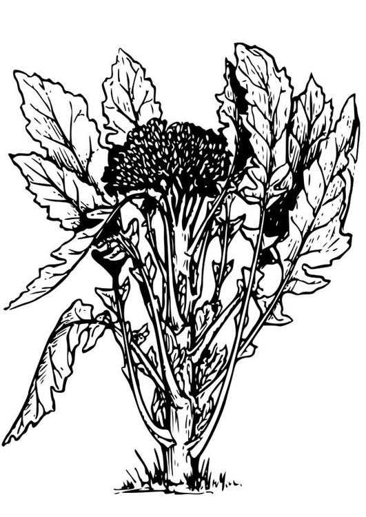 Disegno Da Colorare Broccoli Cat 18651