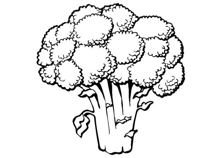Disegno Da Colorare Broccoli Cat 19173