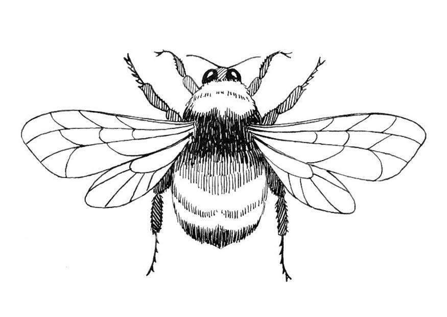 disegno da colorare calabrone
