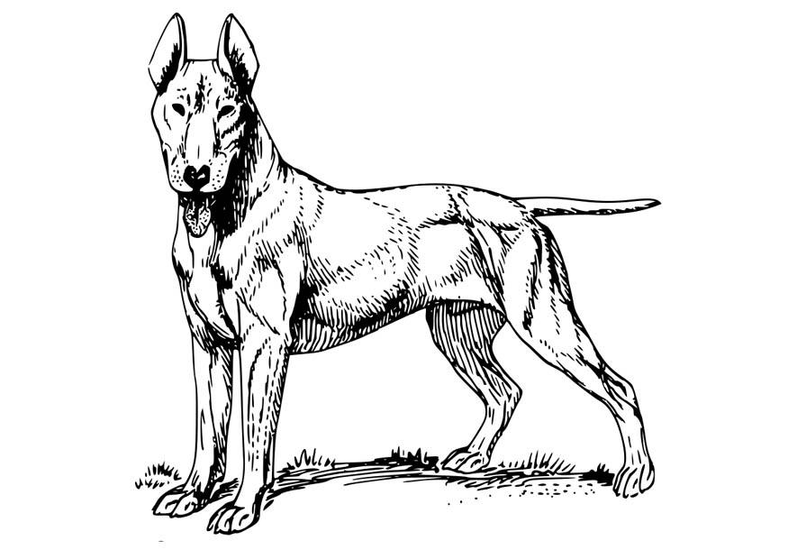 Disegno da colorare cane bull terrier cat 18574 for Cane disegno da colorare