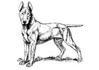 Disegno da colorare cane - Bull Terrier