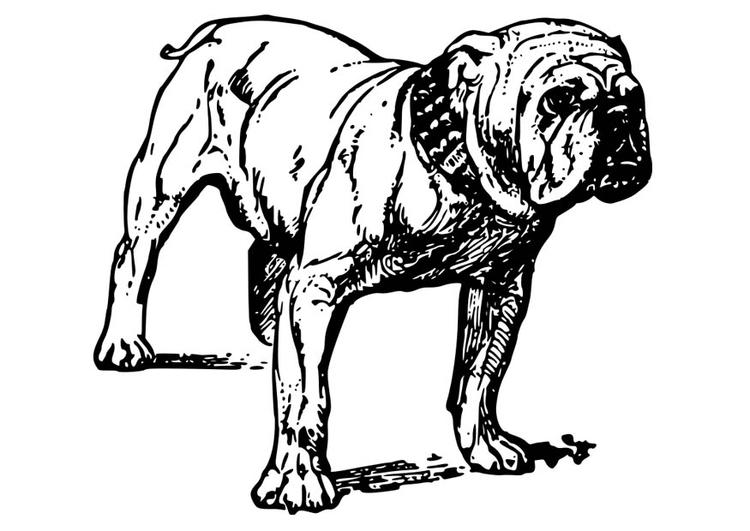 Disegno Da Colorare Cane Bulldog Cat 18584