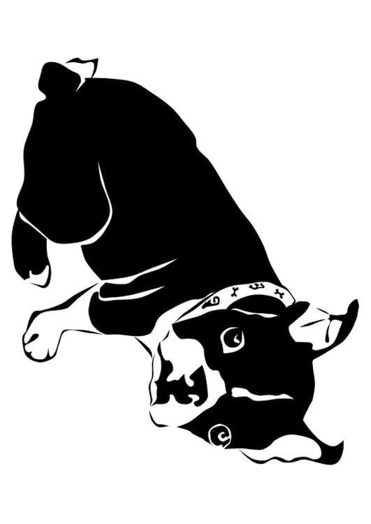 Disegno da colorare cane bulldog francese cat 27818 - Cane da colorare le pagine libero ...