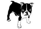 Disegno da colorare cane - bulldog francese