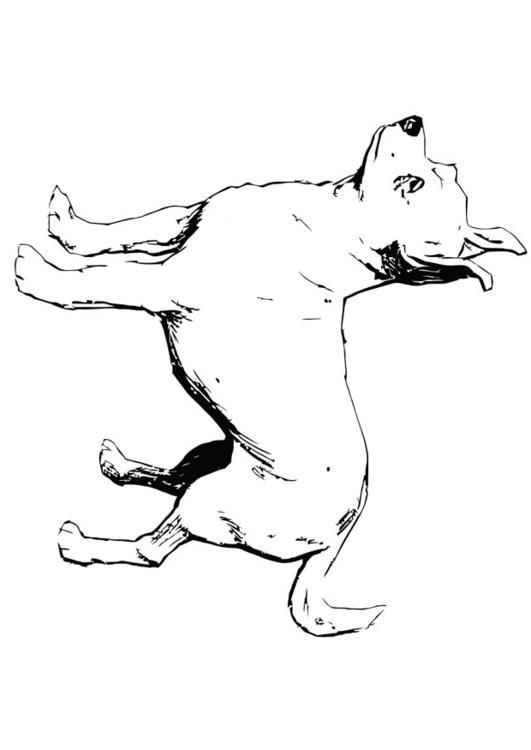 Disegno da colorare cane chihuahua cat 13704 for Cane disegno da colorare