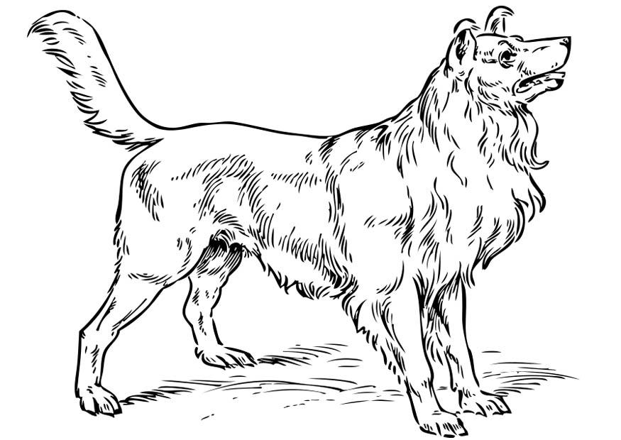dog coloring pages realistic running - photo#23