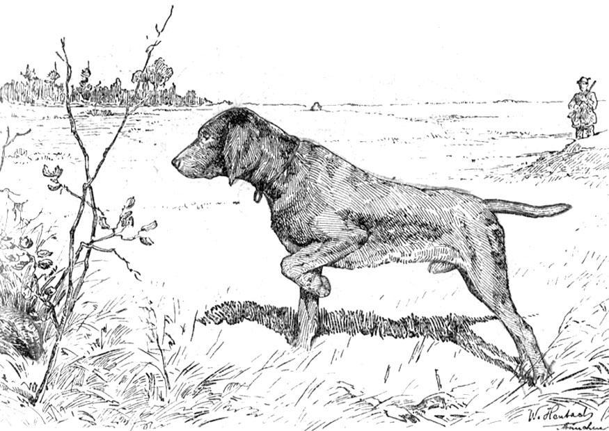 Disegno da colorare cane da caccia cat 9762 - Cane da colorare le pagine libero ...