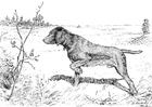 Disegno da colorare cane da caccia