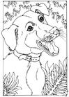 Disegno da colorare cane meticcio