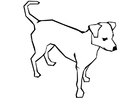 Disegno da colorare cane