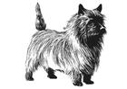 Disegno da colorare cane - Terrier