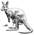 Disegno da colorare canguro