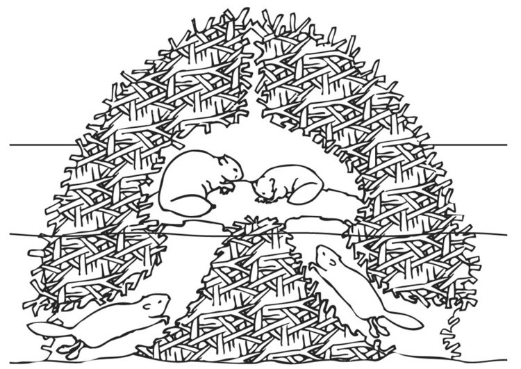 Disegno Da Colorare Casa Dei Castori Cat 9448