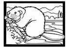 Disegno da colorare castoro con ramo