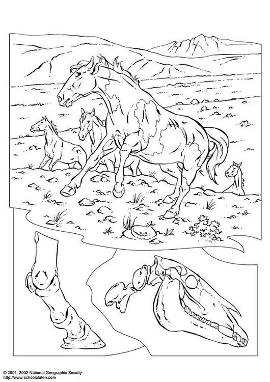 disegno da colorare cavalli selvatici  cat 3080