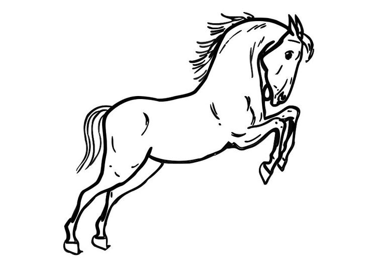 Disegni Da Colorare Di Un Cavallo.Disegno Da Colorare Cavallo Disegni Da Colorare E Stampare Gratis