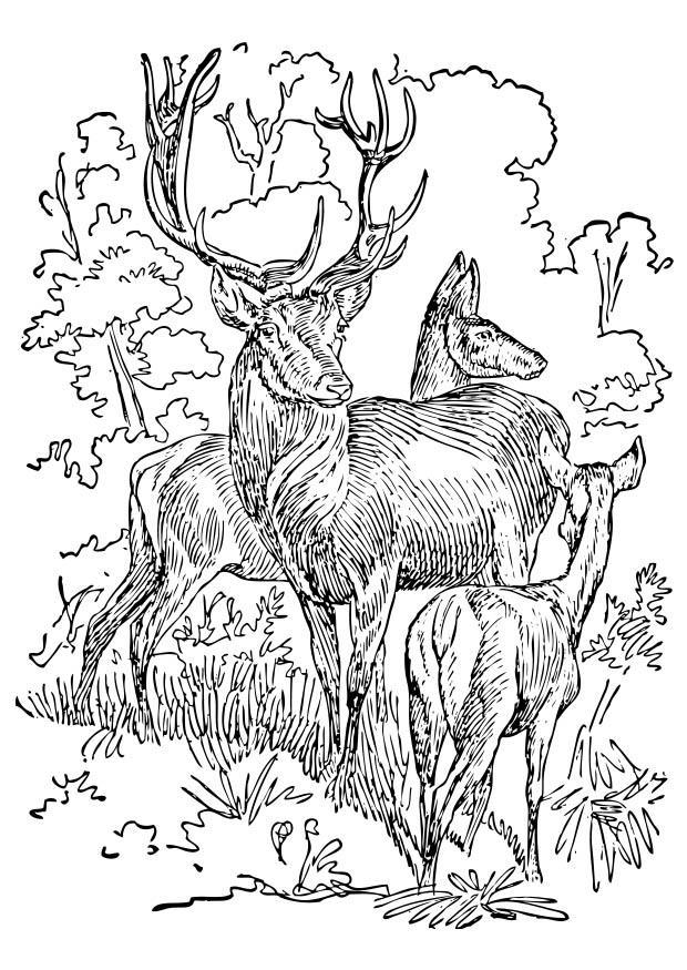 Disegno da colorare cervo e cerva cat 17395 - Elfo immagini da stampare gratuitamente ...