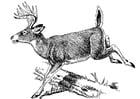 Disegno da colorare cervo