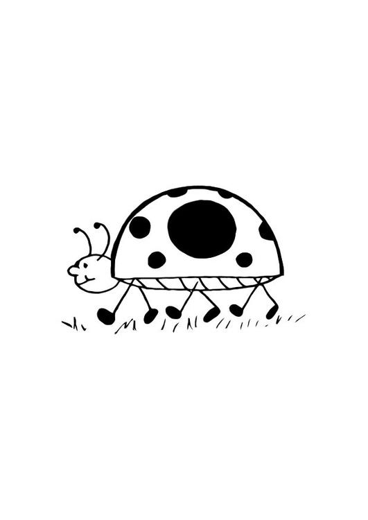 Disegno Da Colorare Coccinella Cat 10718