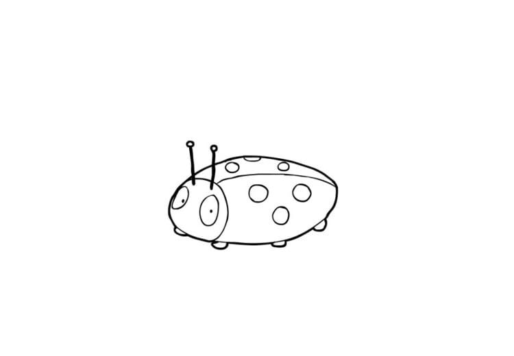 Disegno Da Colorare Coccinella Cat 13849