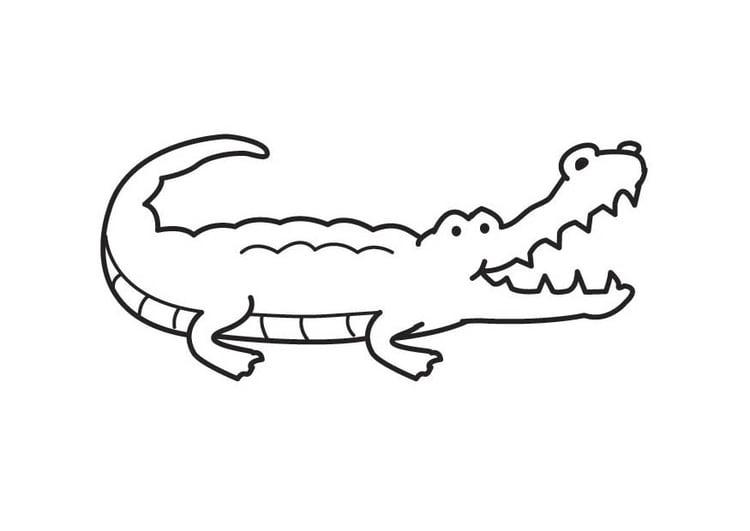 Disegno da colorare coccodrillo cat 17575 for Coccodrillo da colorare