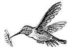 Disegno da colorare colibrì