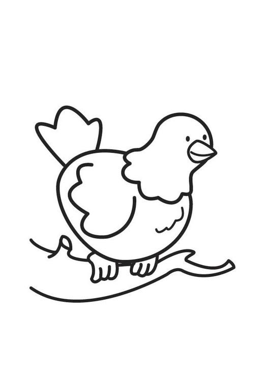 Disegno Da Colorare Colomba Cat 17733