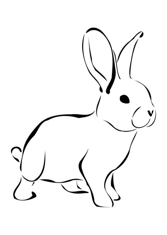 Disegno Da Colorare Coniglio Cat 27276