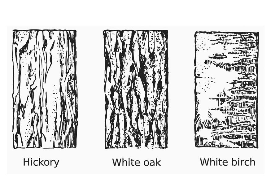 Disegno da colorare corteccia cat 12962 for Foto di alberi da colorare