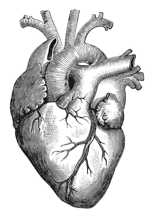 Disegno da colorare cuore Cat 27911