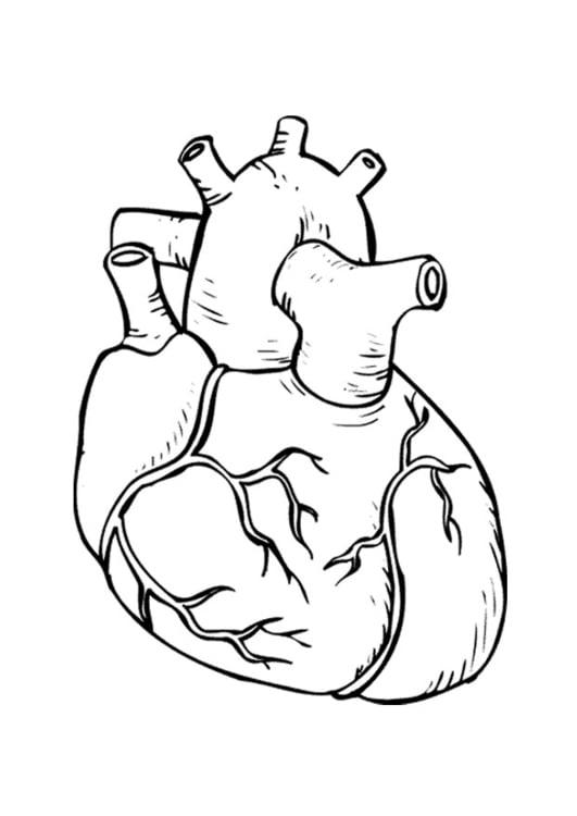 Disegno da colorare cuore cat 9486 for Lepre immagini da stampare