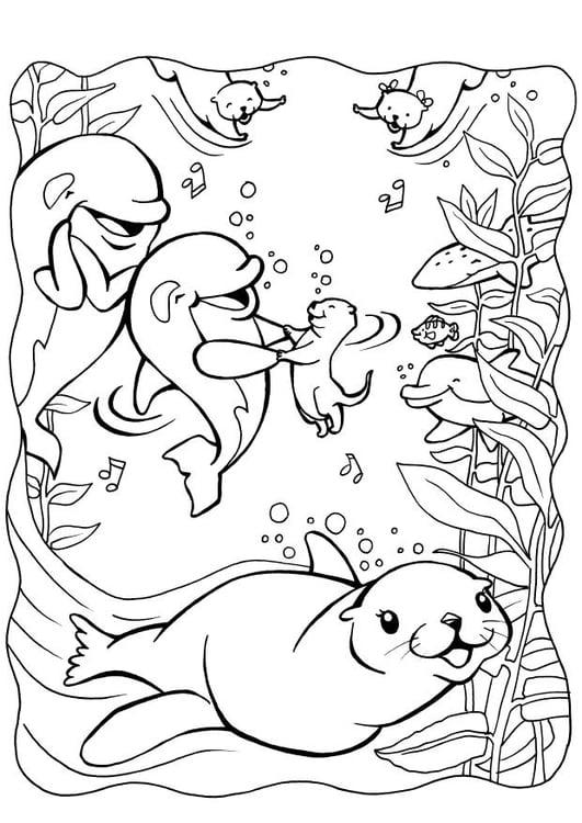 Disegno da colorare delfino con foca cat 7085 for Delfino disegno da colorare