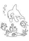 Disegno da colorare delfino e pesce con ancora